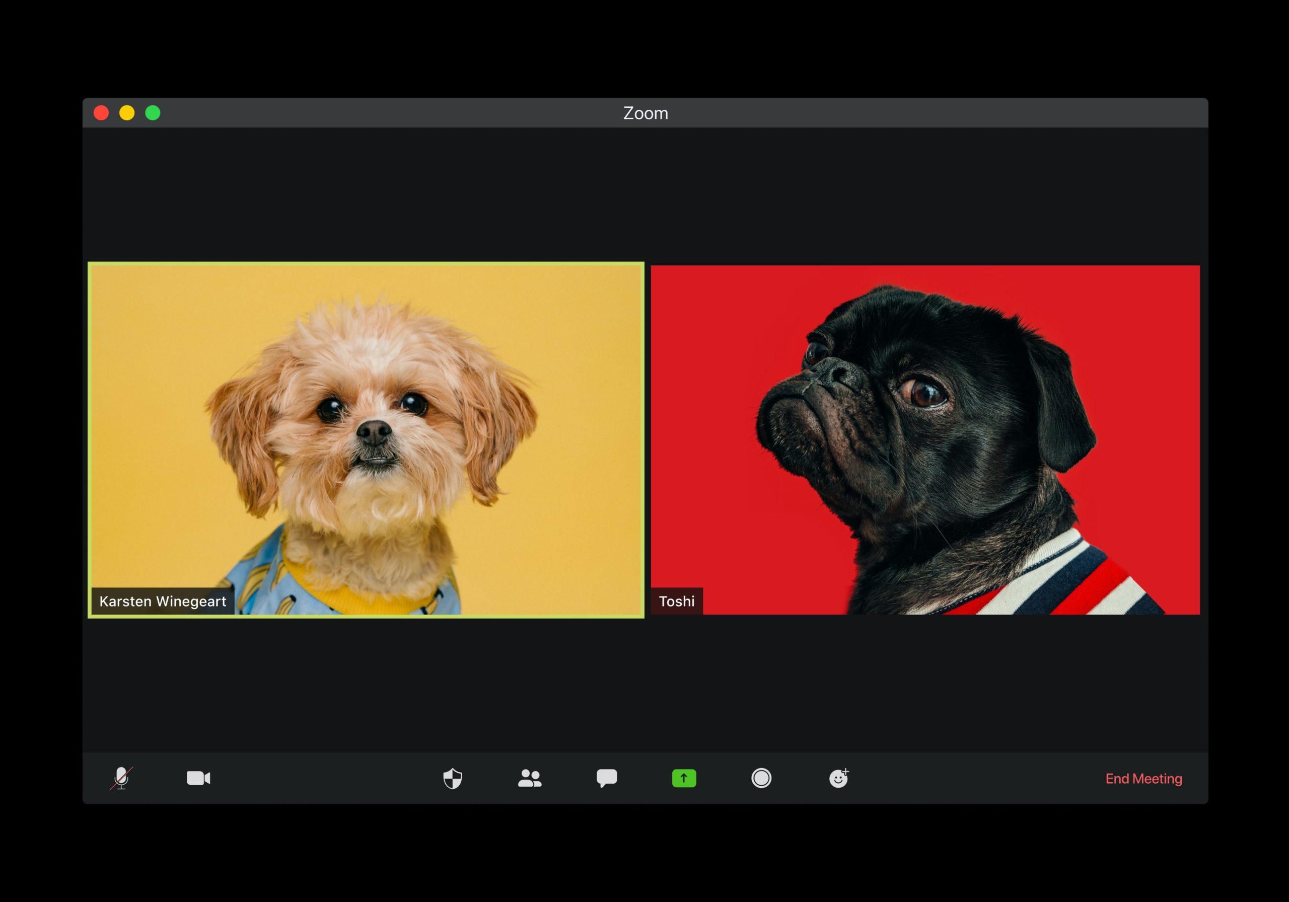 """two dogs """"talking"""" on webcam"""
